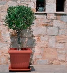 Corfu-square